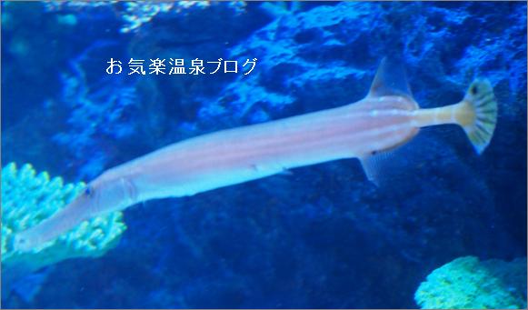 愛知県蒲郡の竹島水族館